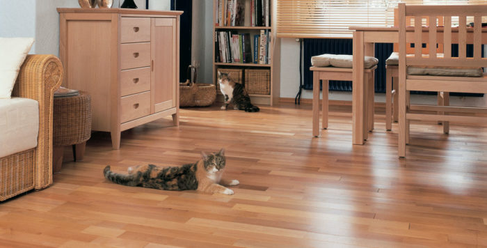 wooden floor in a family home with cats